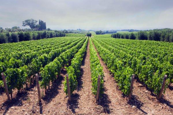 De mooiste franse wijnen