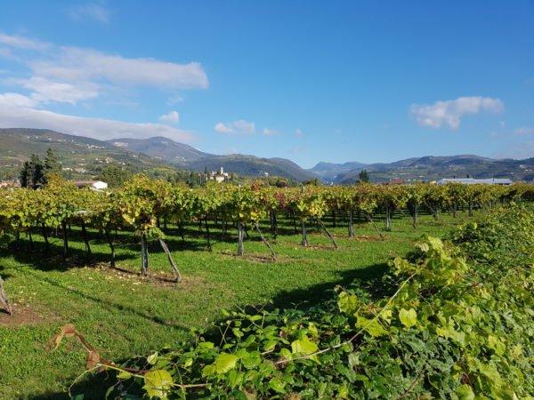 crosarola wijngaard pergola veronese