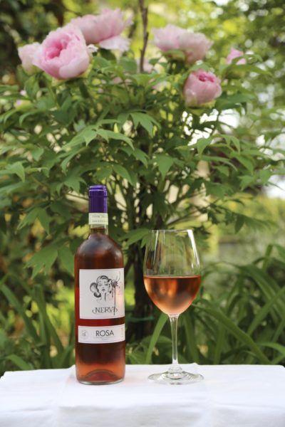 Nervi Rosa uit Gattinara in de tuin