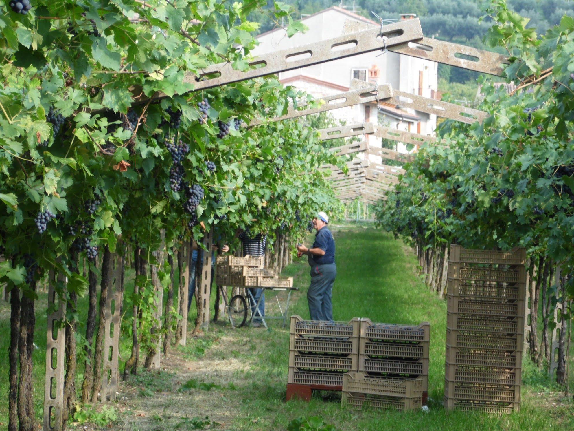 Valpolicella Amarone Crosarola Italië Rode wijn Wijndivas